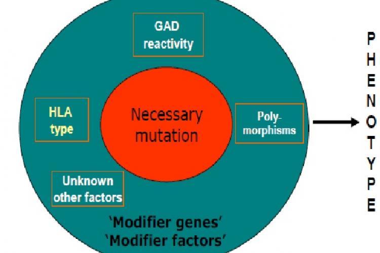 The pathogenesis of inherited monogenetic diseases