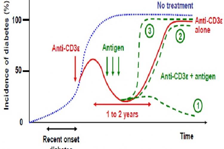Schematic representation of the incidence of diabetes after systemic anti-CD3ε treatment in combination with or without antigen- specific intervention