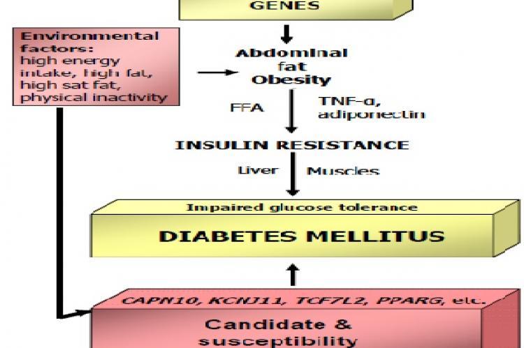 Interrelation between genes and environmental factors in type 2 diabetes