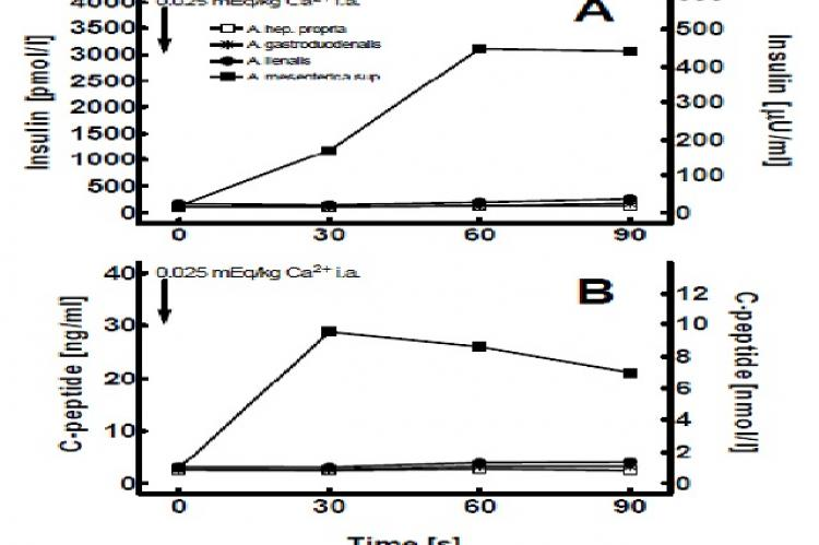 Plasma insulin (A) and C-peptide (B) concentrations after selective intra-arterial calcium injection in the patient
