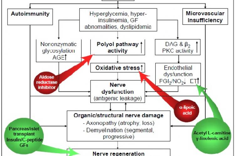Therapeutic interventions based on hypothetic pathogenetic mechanisms of diabetic neuropathy