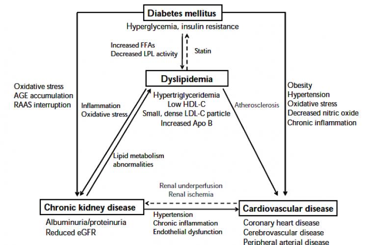 Relationship between dyslipidemia, chronic kidney disease, and cardiovascular disease in diabetes mellitus.