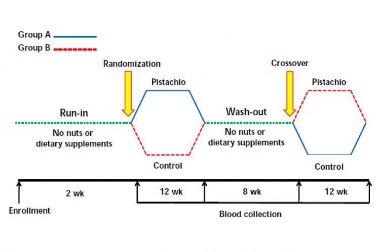 Flow chart of study protocol