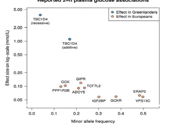 The effect of the TBC1D4 p.Arg684Ter variant on 2-h plasma glucose in Greenlanders compared to the effect of reported variants in Europeans.