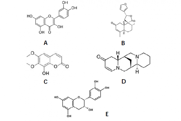 Chemical structures of quercetin (A), transdehydrocrotonin (B), coumarin fraxidin (C), multiflorine (D), and epicatechin (E).