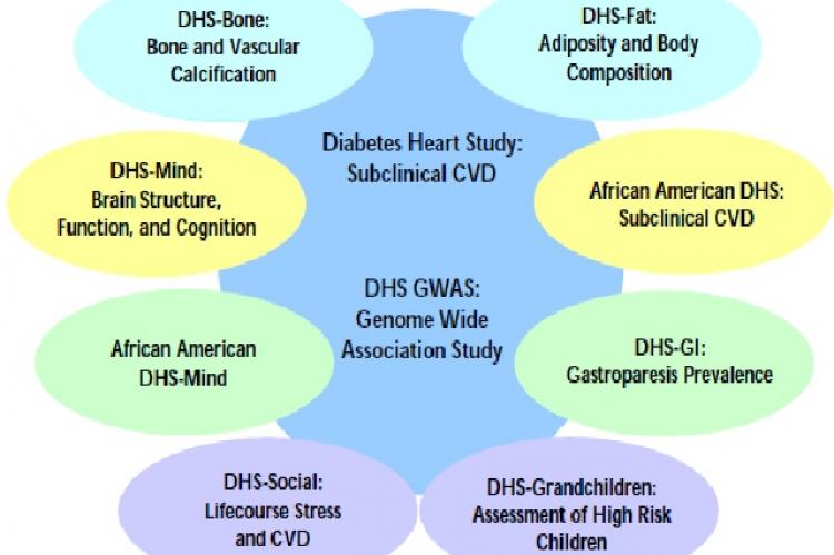 The Diabetes Heart Study (DHS) family of studies