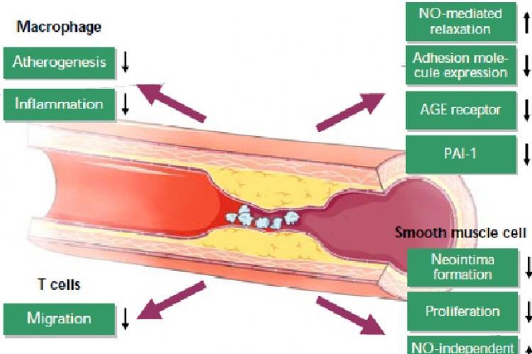 Vasoprotective effects of GLP-1