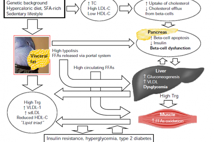 The interdependent link between dyslipidemia, beta-cell dysfunction, and type 2 diabetes