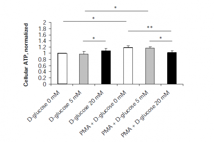 Changes in cellular ATP in erythrocytes acutely exposed to various concentrations of D-glucose