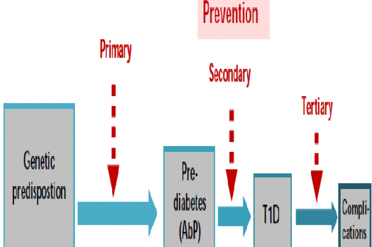 Natural history of type 1 diabetes and opportunities for T1D prevention