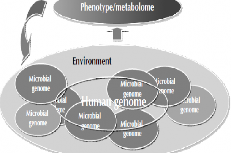 Factors influencing the metabolome